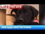 Инстаграмм с фото сочинских щенков Гаса Кенуорти набирает популярность